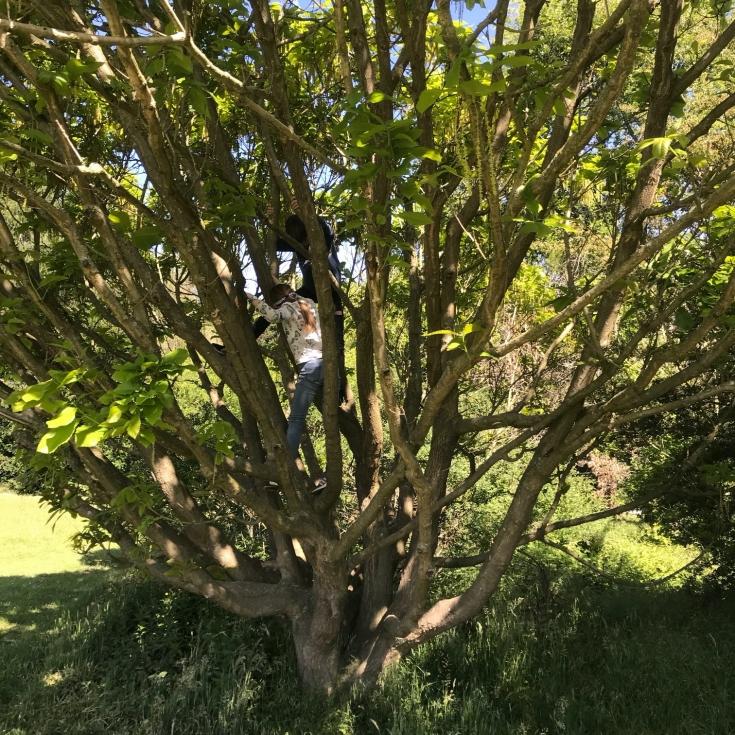 Bild 9: Am Forstbotanischen Garten