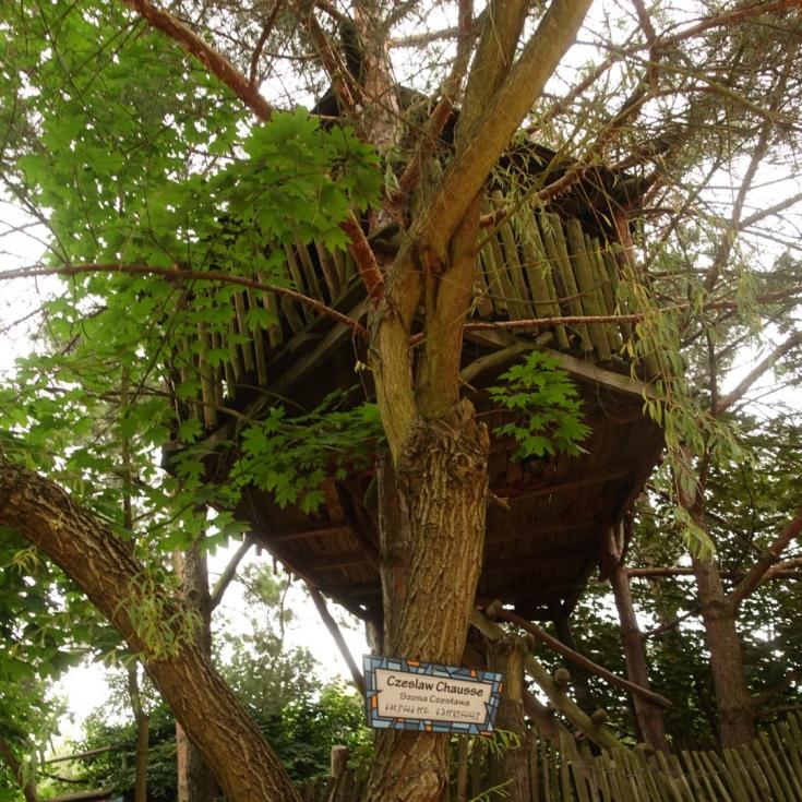Bild 4: Freizeitpark Kulturinsel Einsiedel