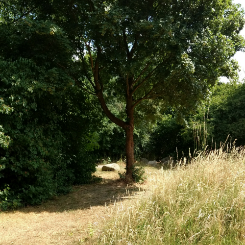 Bild 9: Jüttkenmoor
