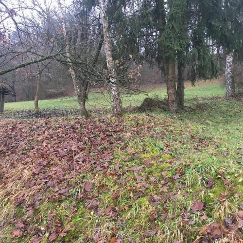 Bild 1: Matschspielplatz Muddy Frogpond